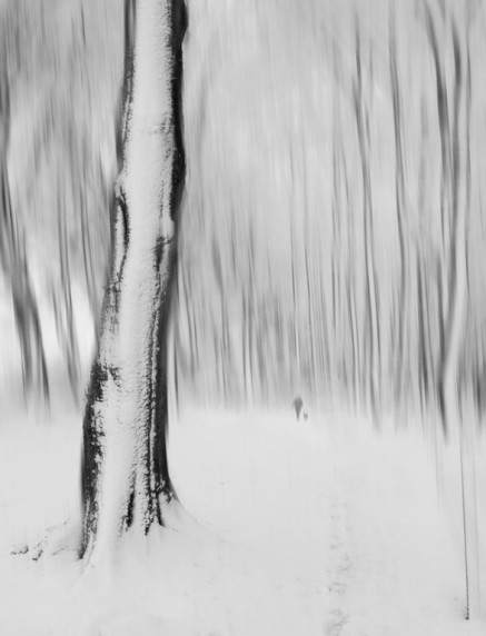 After the Snow Caddam Woods by Malcolm McBeath