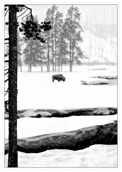 Alone in the Snow by Colin Stacey - Mono Print 2nd