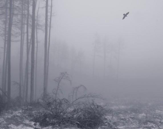 February Woods by Malcolm McBeath - Mono Print 4th