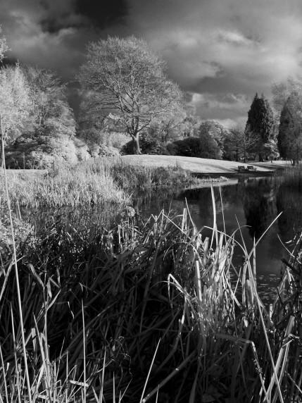 Scone Park by Alan Brown - Mono Print 4th