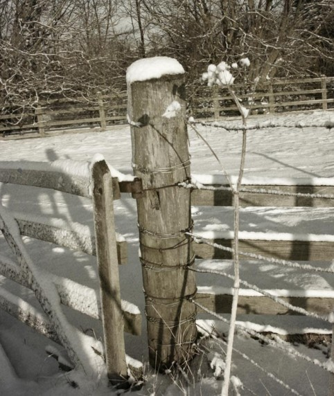 Snowfence by Lorna Morrison - Projected Image 1st