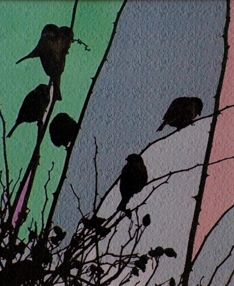 Sparrows in Silhouette by Eva Harvey - Colour Print 2nd