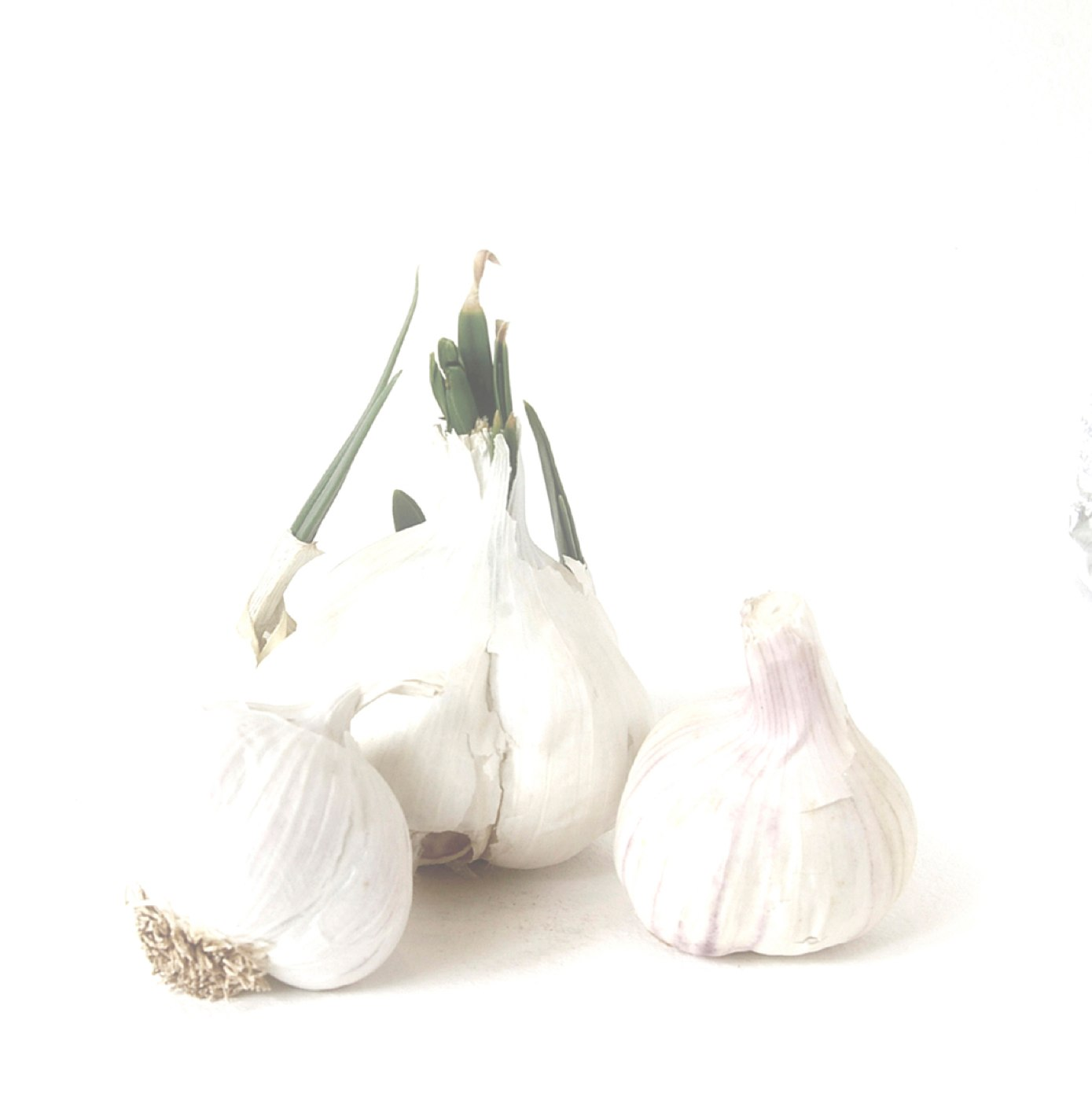 Garlic Trio