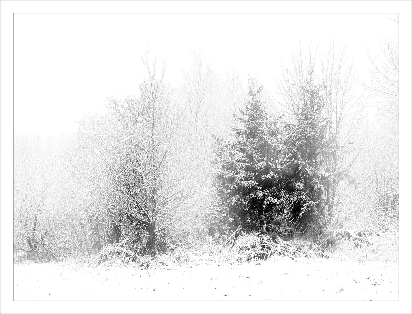 Mono Print - 1st Place: Trees in Snow by Ross Will
