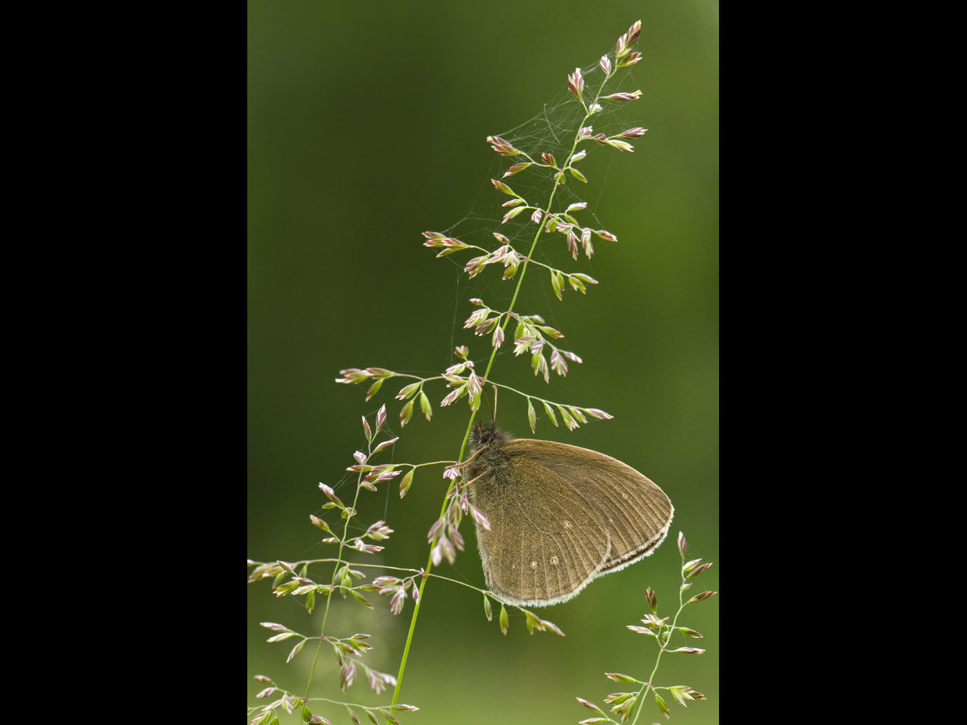 Projected Image - 2nd Place: Ringlet by Stephanie Cowie