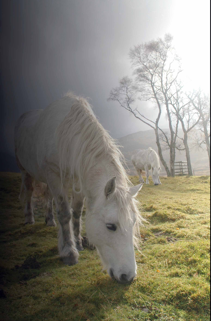 Colour Print - 1st Place: Horses in the Mist by Helen McFarlane