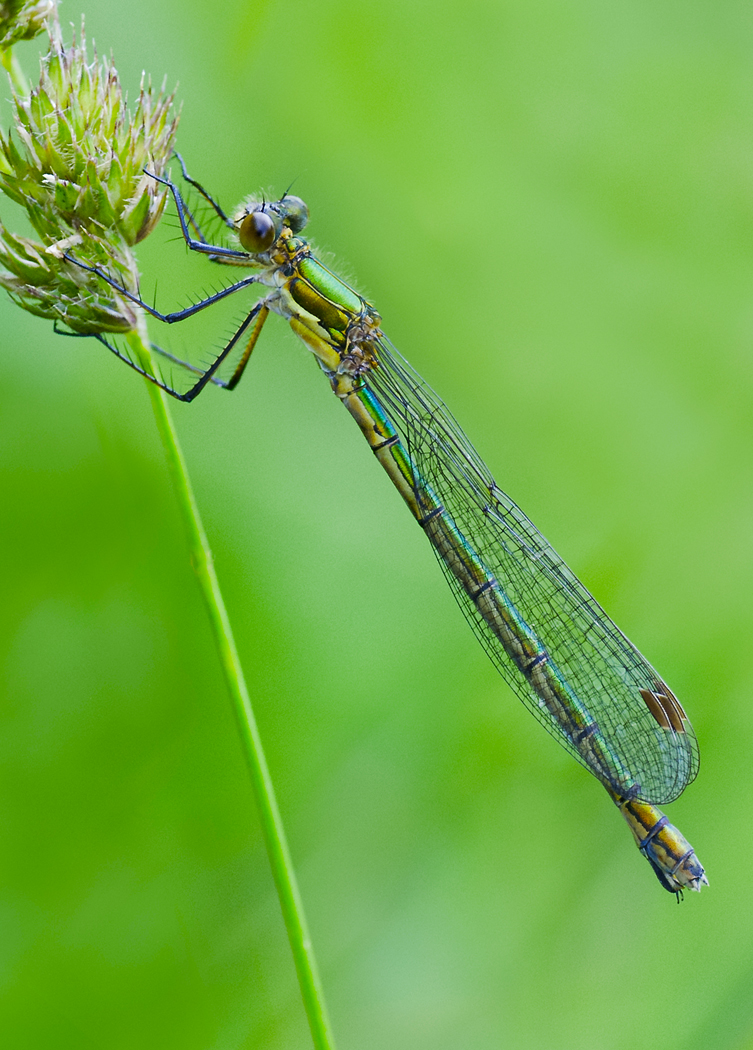 Projected Image - 1st Place: Damsel Fly by Alan Hume