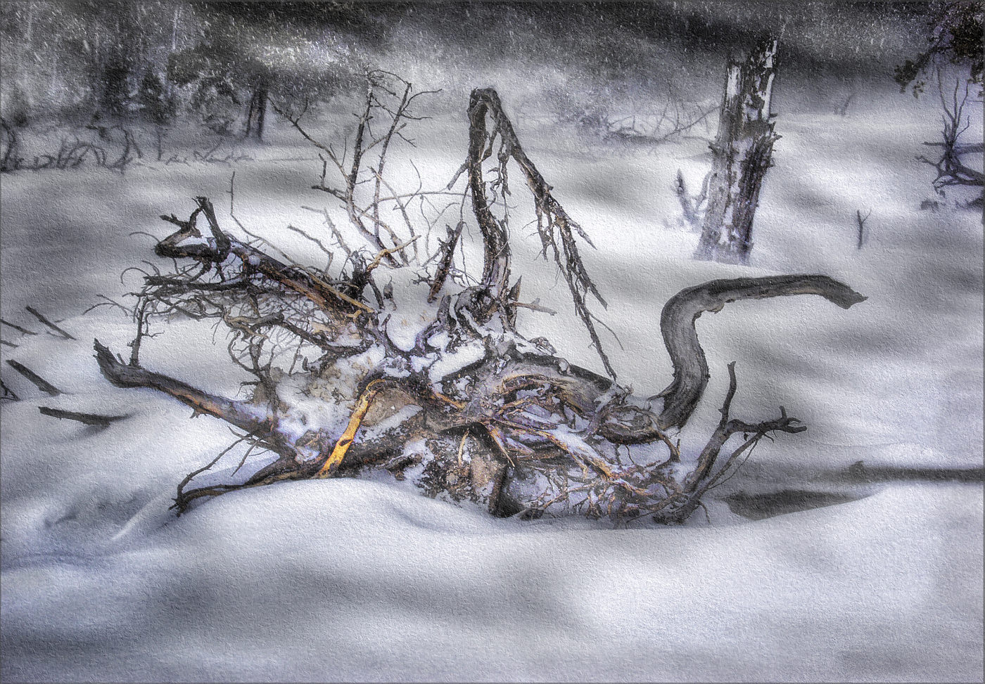 Colour Print - 1st Place: Winter Roots by Colin Stacey