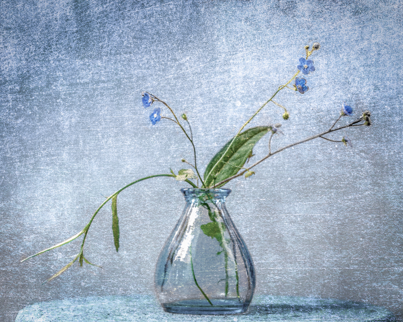 COLOUR PRINT               Div2	2nd	FORGET-ME-NOTS	CATHERINE JONES