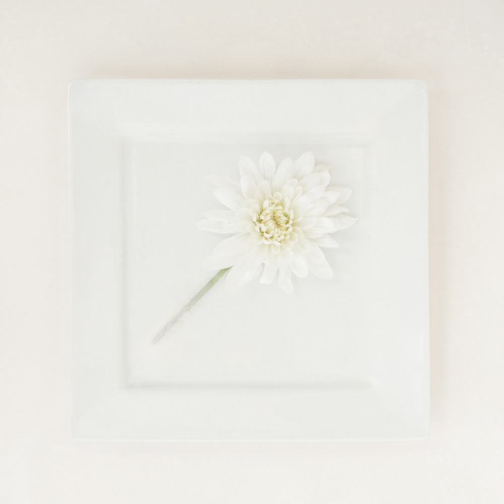 COLOUR PRINT               Div2	2nd	WHITE FLOWER. WHITE PLATE	CATHERINE JONES