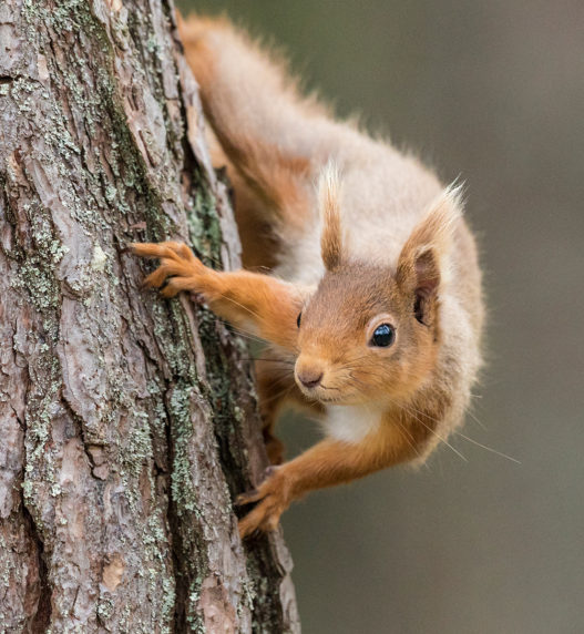 1st Red Squirrel James Anderson DIV 2 PROJ